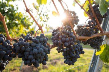 Abierto el plazo de inscripción para participar en el Mercadillo de la 12ª Edición de la Feria del Vino de El Molar.